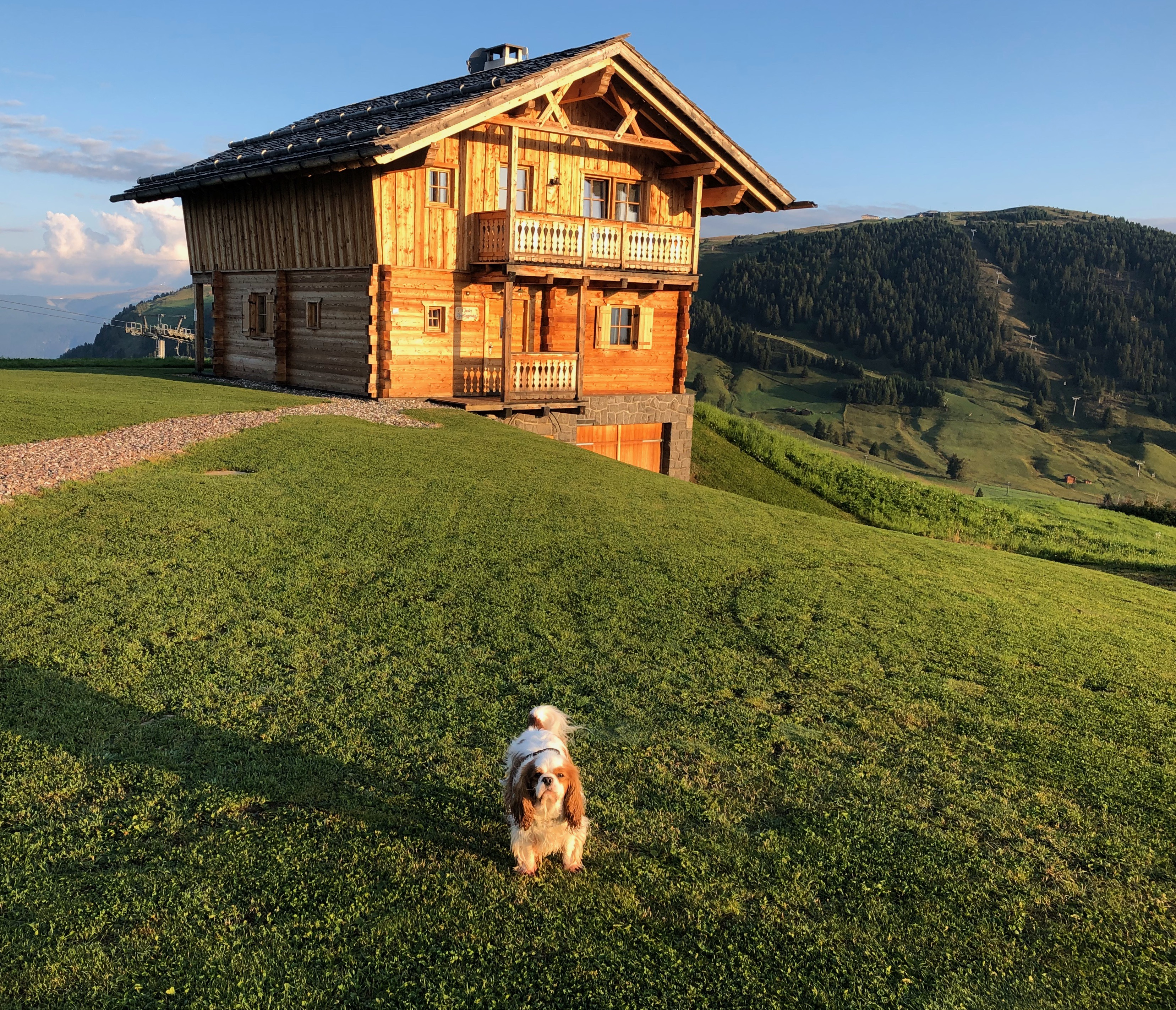 "Sunrise in Süd-Tirol in front of a wooden holiday house bathed in light; our ""Ray of Light"" is Raggio di Luce, a lovely miniature spaniel. He stands in front of the house, ready to shine."